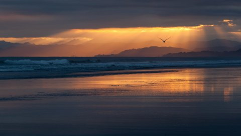 Новая Зеландия, побережье, пляж, море, океан, вечер, закат, оранжевый, небо, облака, птицы, полет, силуэт