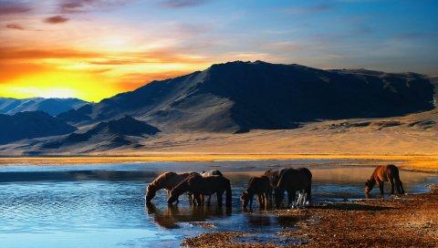 лошади, стадо, водопой, озеро, гора, закат