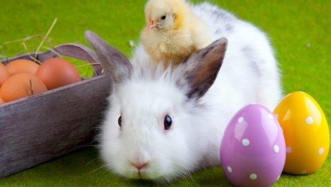кролик, курица, яйцо, пасха, дружба