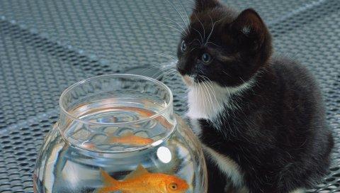 кошка, аквариум, рыба, черный, белый