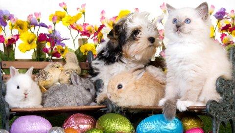 животных, Пасха, яйцо, скамейки, кролик, кролик, щенок, котенок, курица, цветы