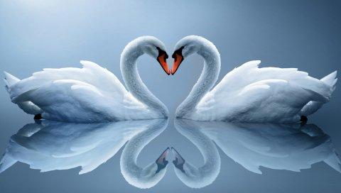 белых лебедей, пара, сердце, отражение