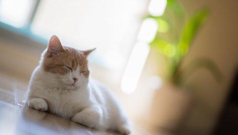 кошка, сон, отдых, размытость