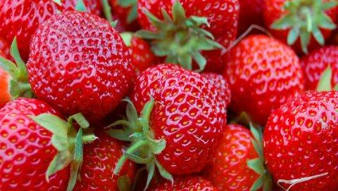 клубника, ягоды, фрукты, продукты питания, красный