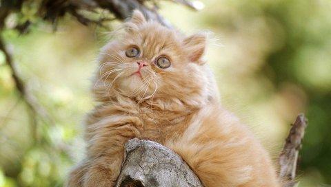 Дерево, кошка, лежа, пушистый