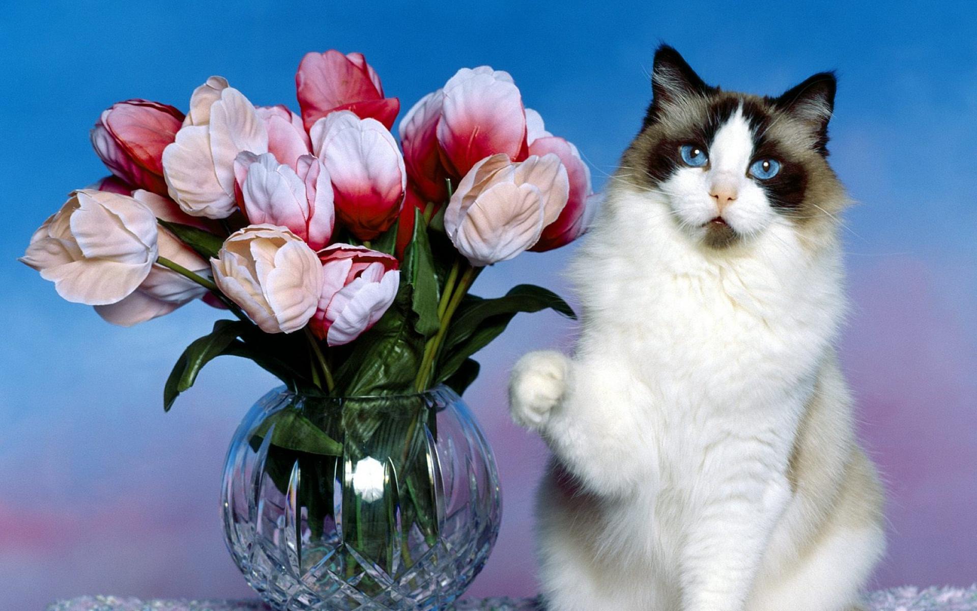 подъемный кошка с цветами поздравления фото айва, груши