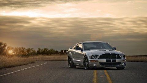 Ford, mustang, shelby, серебро, автомобиль для мышц,