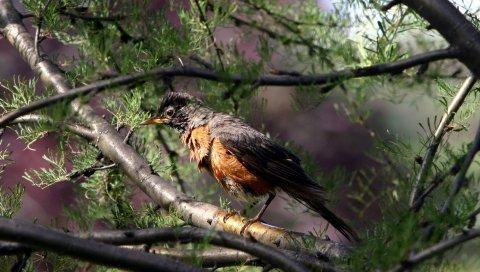 птица, дерево, ветви