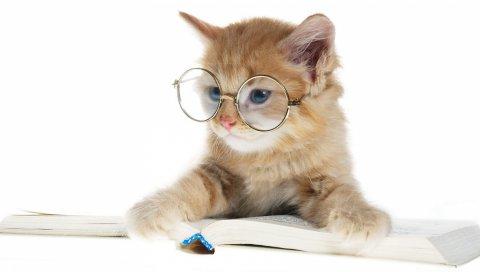 круглых очков, книги, кошки