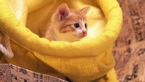 котенка, красный, желтый, мешок
