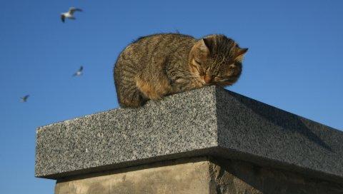 кошки, сна, гранитный