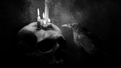 ворон, птица, рисунок, череп, свечи