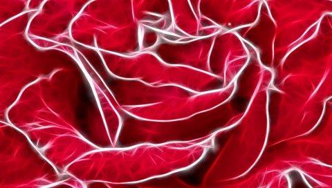 Роза, лепестки, белые, светлые