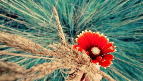 цветы, макро, яркие