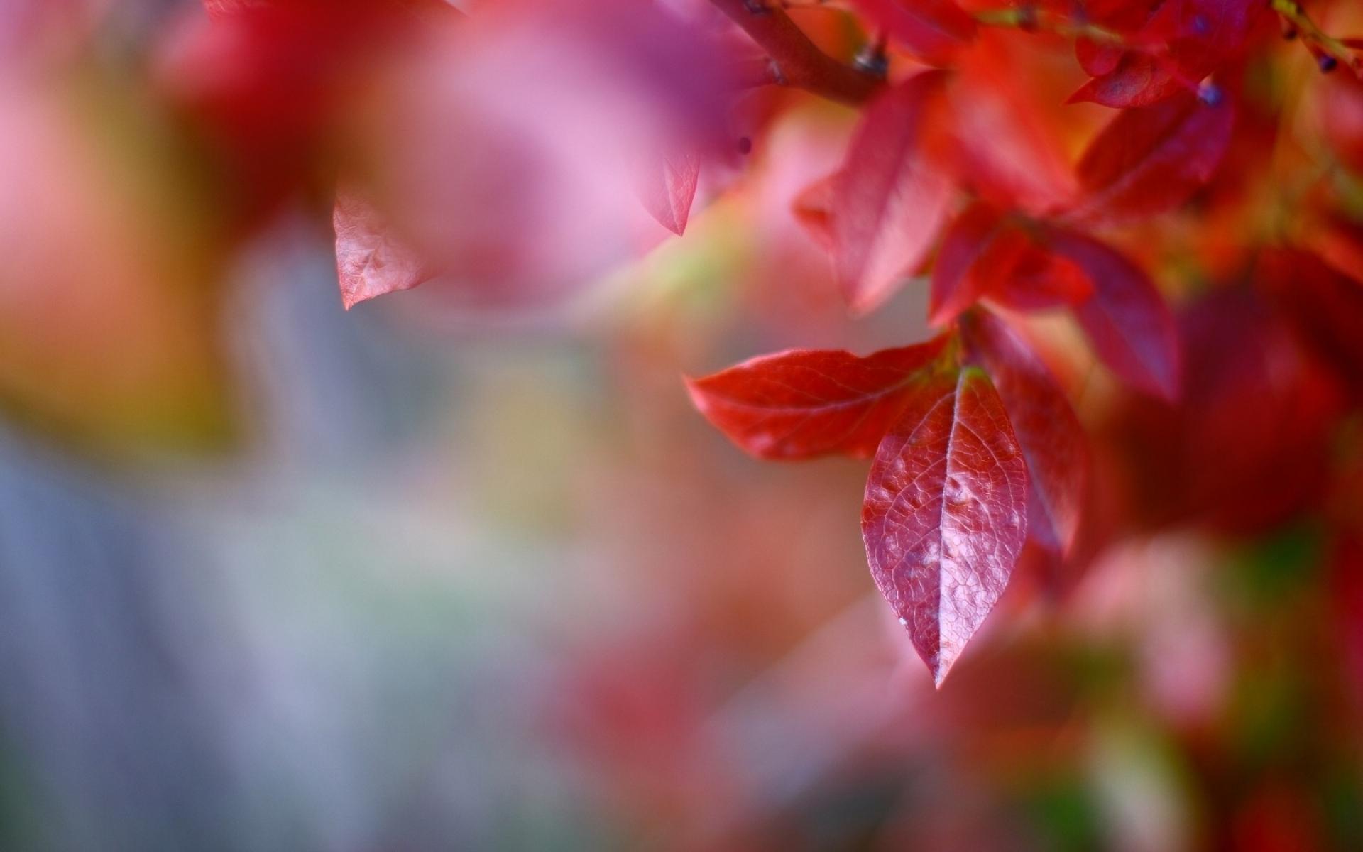Картинки макро, осень, листья, красный, деревья, природа,ветви фото и обои на рабочий стол
