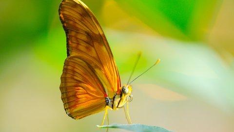 бабочки, насекомые, макро, крылья, листья, солнце, хоботок