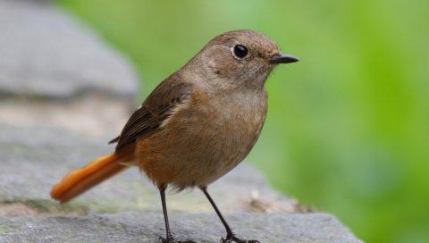 Птица, поверхность, макро, камень, зеленый