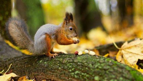 Орехи, белки, леса