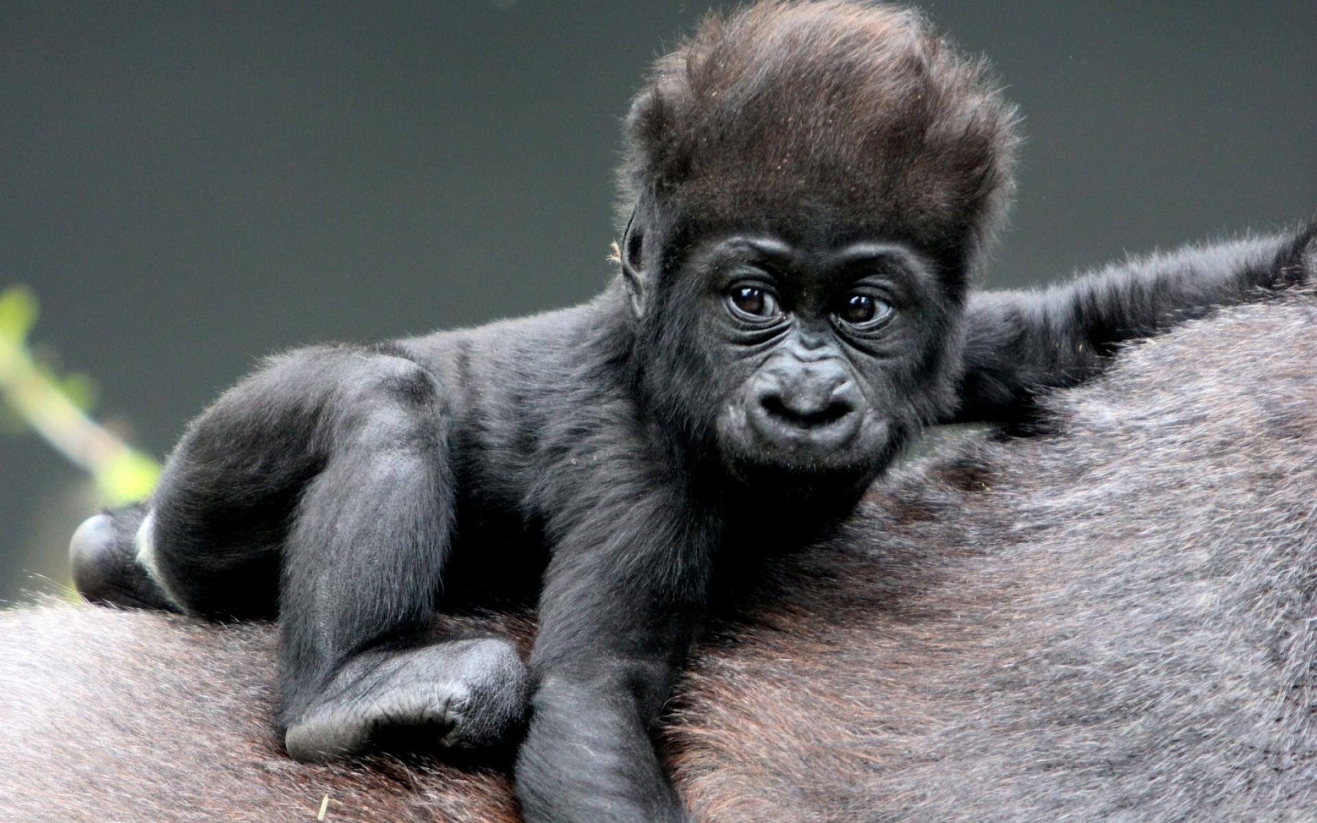 картинка про обезьянку заявляет, что работать