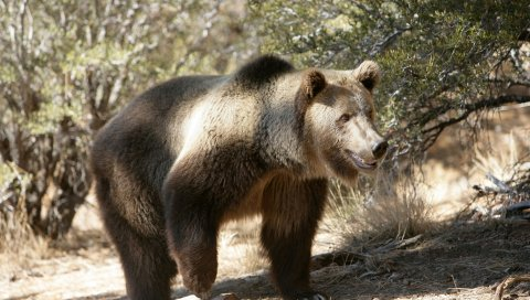 Медведь, трава, деревья, скалы, прогулка