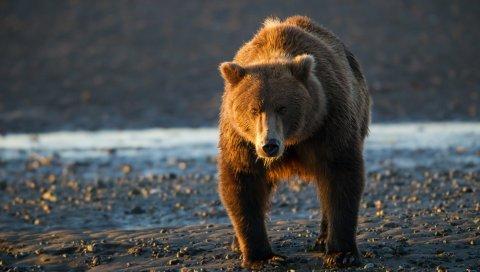 Медведь, закат, вода, скалы