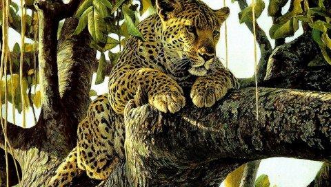 Леопард, хищник, рисунок, искусство