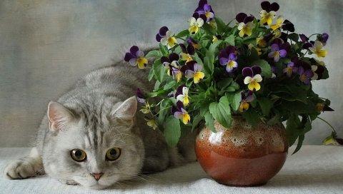 Кошки, британские, синие, цветы, анютины глазки, ваза, цветок, керамика