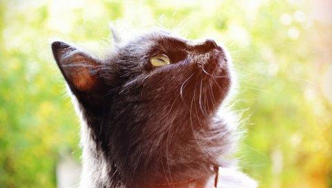 Кошка, соня, боке, осень
