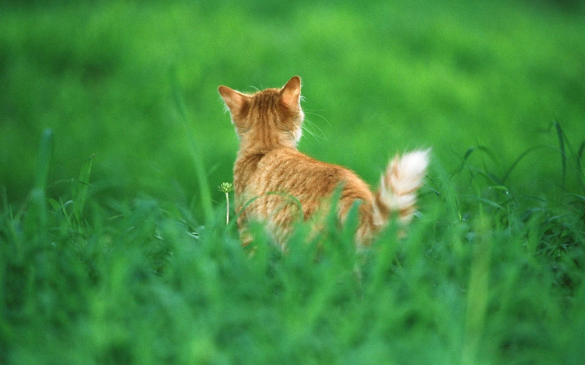 cat diseases transmitted to humans symptoms