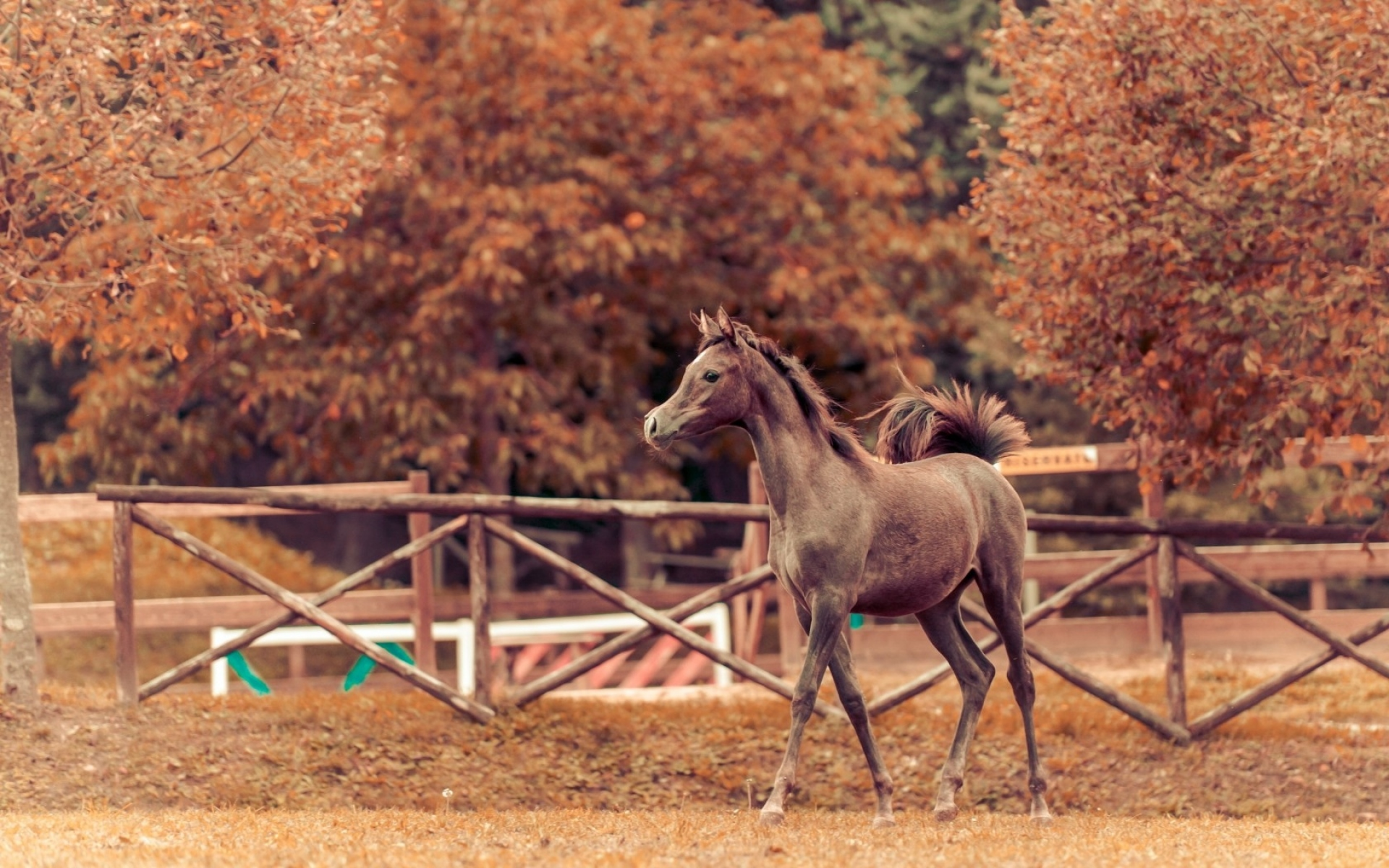 Картинки лошадей на фоне осени