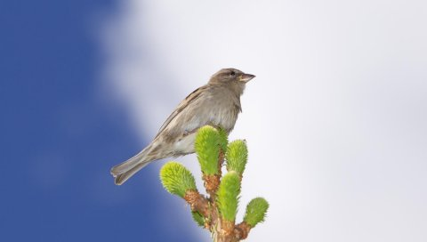 Животное, птица, воробей, листья, лист, ветка, небо, облака, клюв