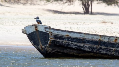 Вода, гуси, лодка, птица, мокрый, пляж