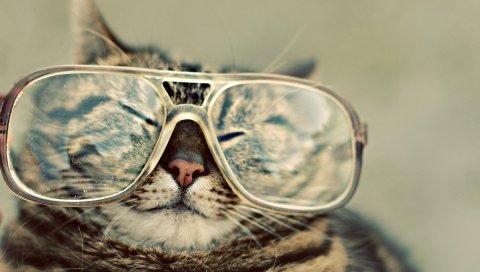 Кошка, очки, лицо, косоглазие