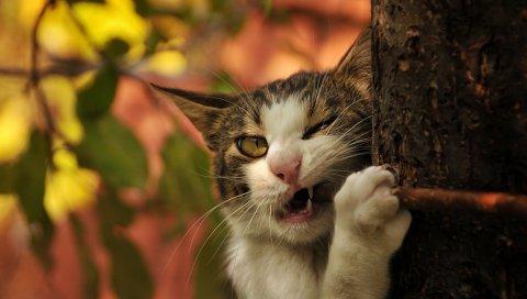 Кот, дерево, туловище, грызть