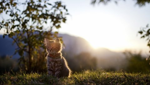Котенок, трава, свет, дерево