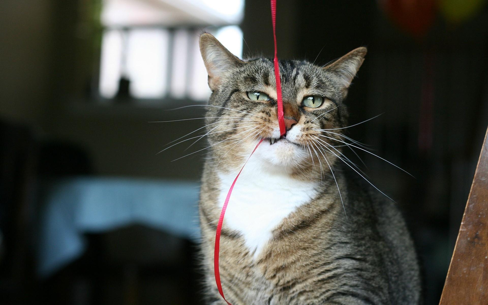 Картинки Кошки, пряжа, игривые, домашние фото и обои на рабочий стол