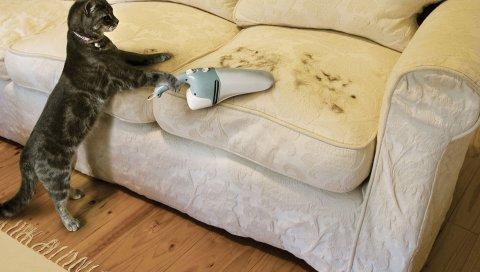 Кошка, волосы, пылесос