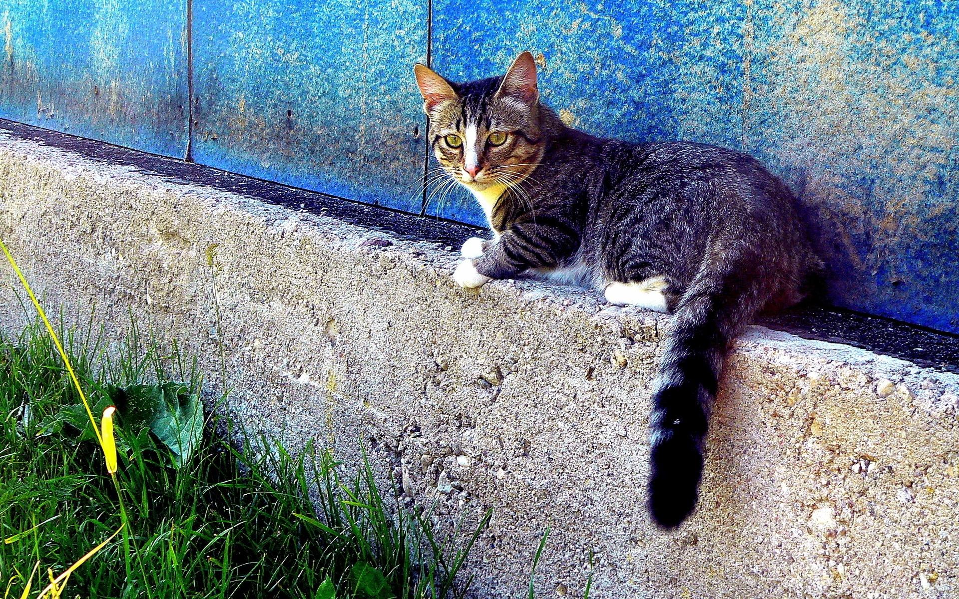 Кот забор под забором без смс