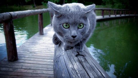 Кот, река, рельс, сидеть, испугаться