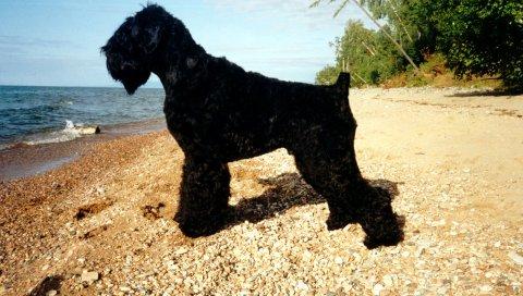 Собаки, пляж, красивые
