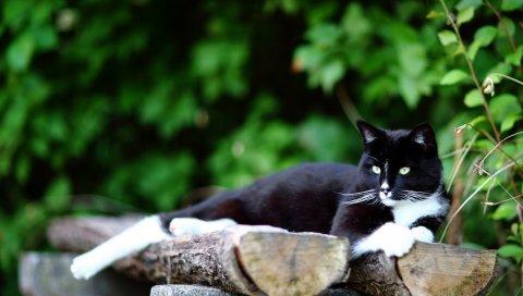 Кошка, бревна, трава, ложь