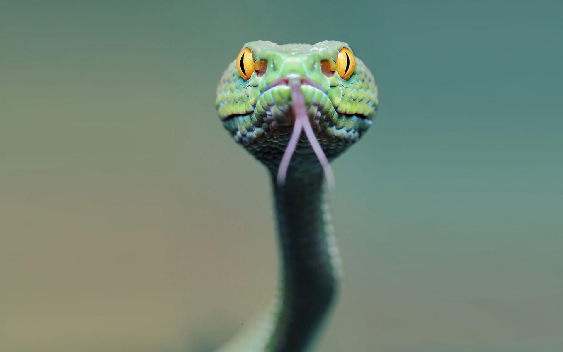 картинки змей для рабочего стола на весь экран лимузине для