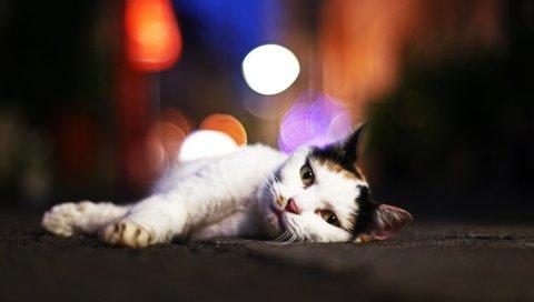 Кошка, лежа, блеск, сонный