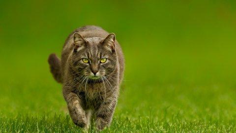Кошка, трава, прогулка, взгляд