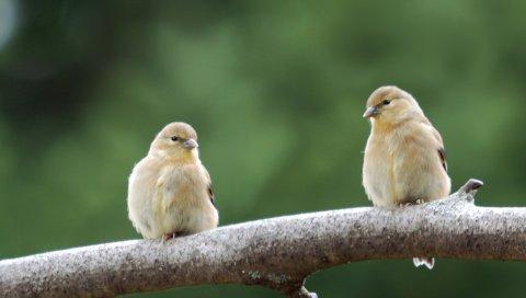 Птица, ветка, пара