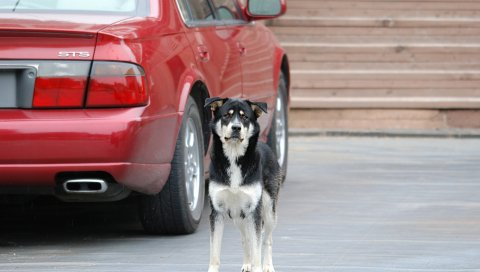 Собака, улица, автомобиль