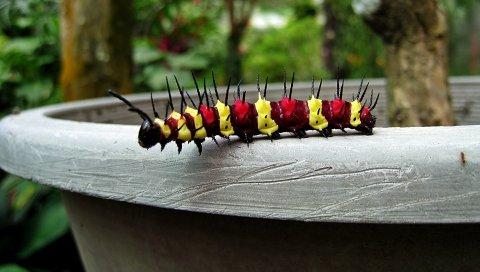 Гусеница, красочная, поверхность