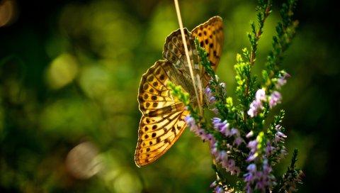 Бабочка, трава, растения, полет