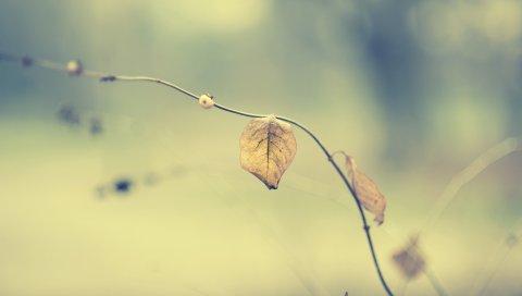 Листья, трава, стебель, сухая