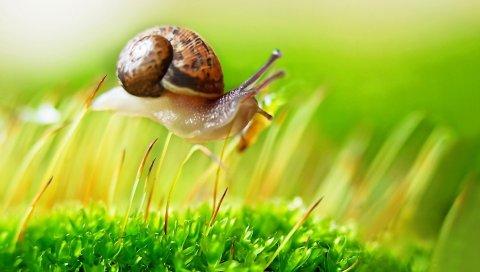 Улитка, трава, ракушка, растение